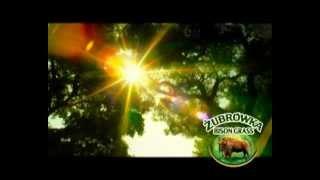 видео трава зубровка