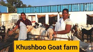 Khushboo Goat Farm, Rau, Indore