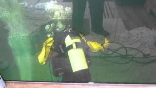connectYoutube - SCUBA diving in koi pond to fix bottom drain air lines