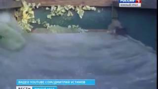 Горностай прыгает на батуте(Поймать этого зверька непросто – горностай-спортсмен попал только на видео. Заметив странные следы, хозяин..., 2016-12-02T16:33:24.000Z)