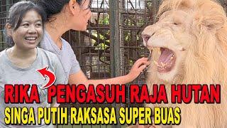 Download lagu RIKA SANG PENGASUH SINGA PUTIH RAKSASA - LION WHISPERER