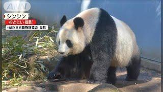 上野動物園の雄パンダ・リーリーに発情の兆候(20/01/22)