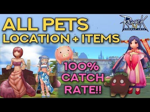 PET CATCHING GUIDE: 100% SUCCESS RATE!! | Ragnarok Mobile Eternal Love