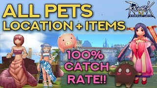 PET CATCHING GUIDE: 100% SUCCESS RATE!! | Ragnarok Mobile Eternal Love