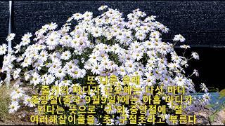 구절초, (九節草, 선모초, White-lobe Kor…