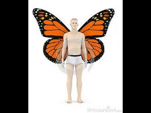 6 most beautiful butterflies in the world - YouTube  6 most beautifu...