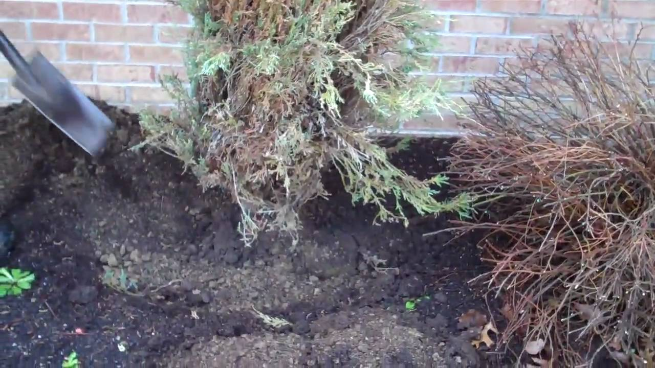 How to Remove Bushes recommendations