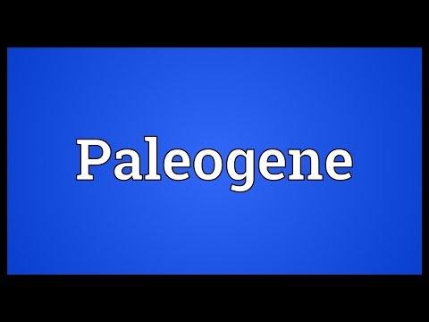 Paleogene Meaning