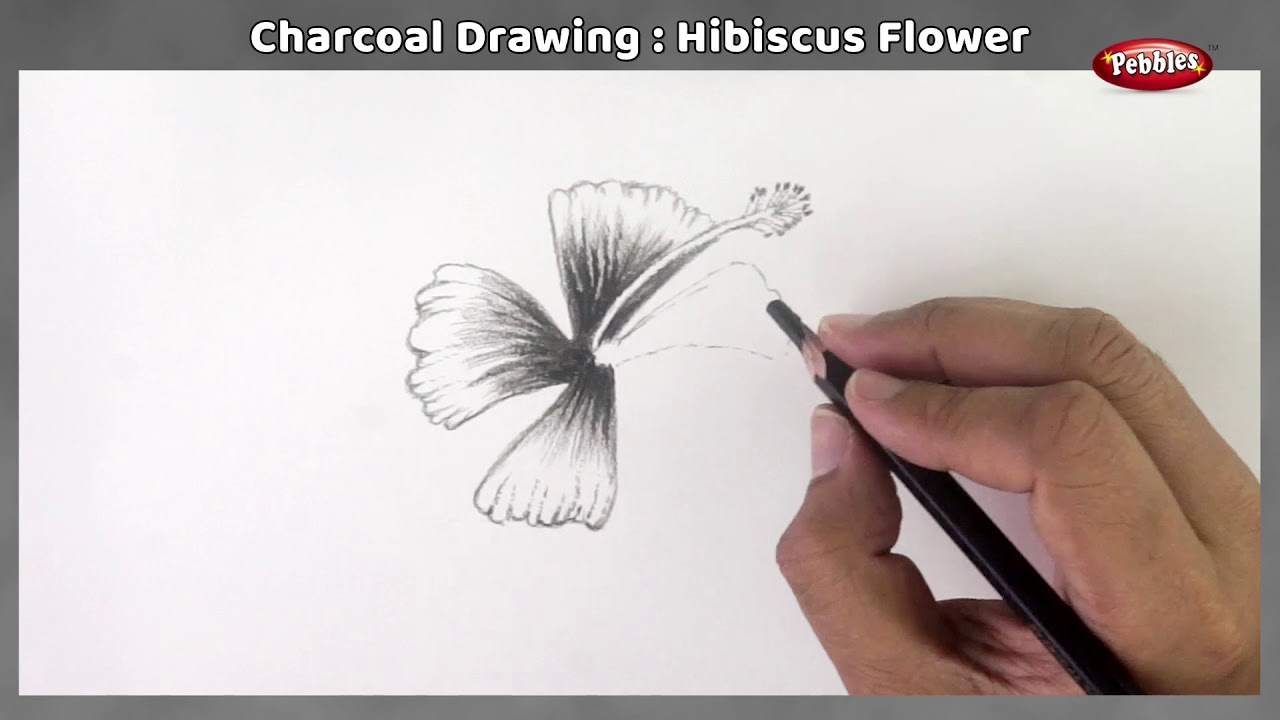 Hibiscus Flower Sketching With Charcoal Pencil Hibiscus Flower