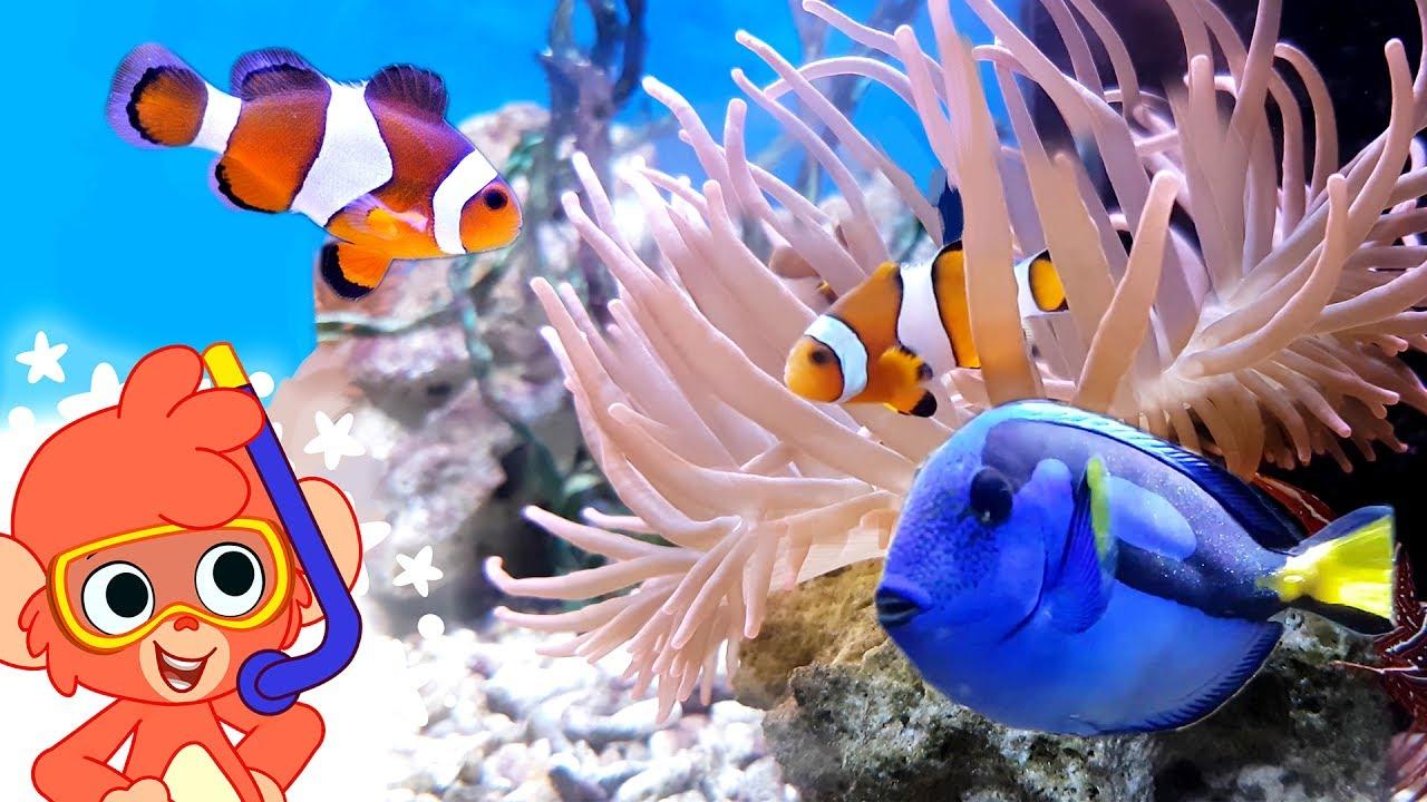Sea Animal Videos for Kids | Learn Ocean Animals | Club Baboo