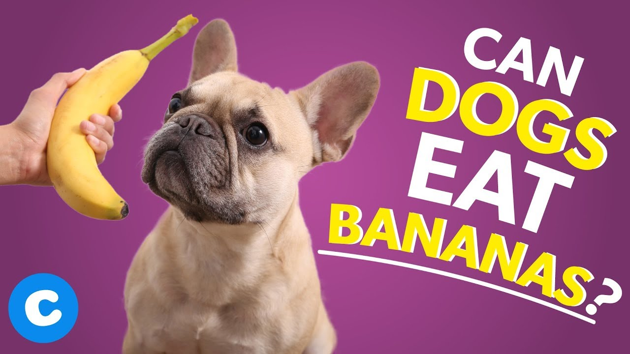 Can Dogs Eat Bananas? - YouTube