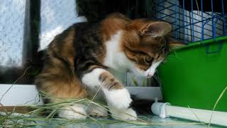 Котёнок кушает СЕНО)