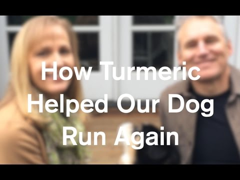 How Turmeric Healed Our Dog And Helped Him Run Again - AnOregonCottage.com