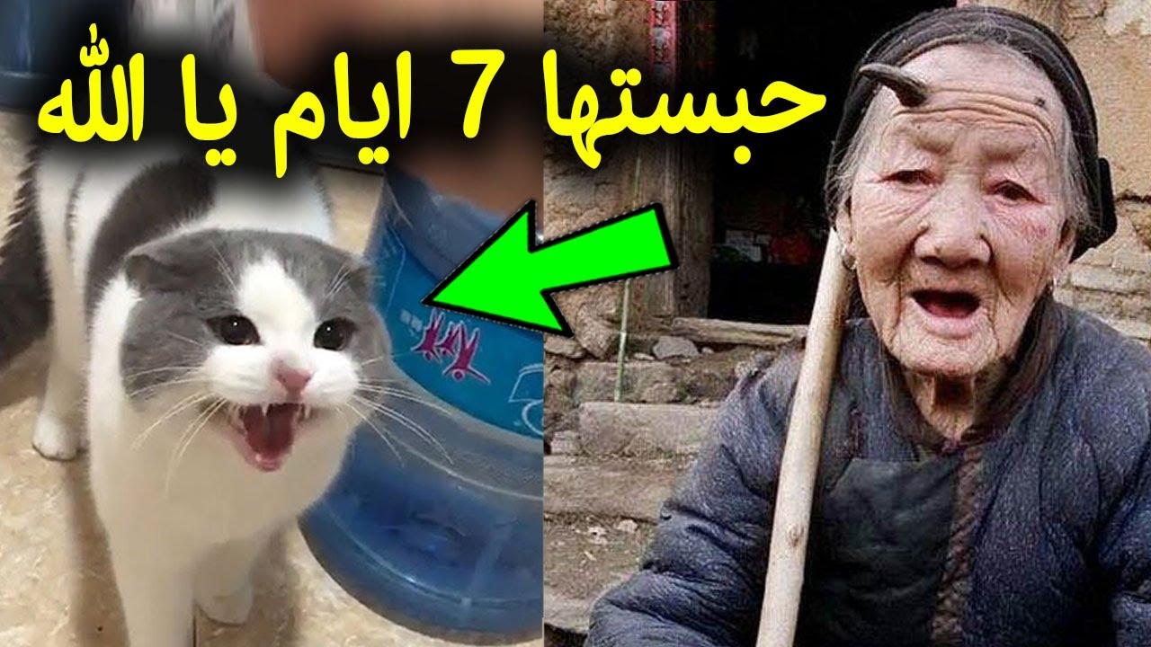 شاهد امرأة عجوز حبست قطة لمدة 7 ايام.. لن تصدق ماذا حدث لها في النهايه !! سبحان الله