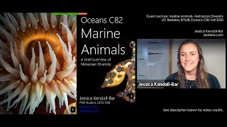 UC Berkeley Guest Lecture on Marine Animals: Metazoan Diversity by Jessica Kendall-Bar