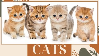 Cat vocabulary in English  Cute cats and kittens