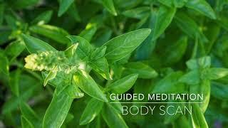 BODY SCAN: 15 Minute Guided Meditation | A.G.A.P.E. Wellness