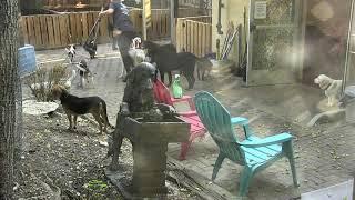 Outside Dog Yard Cam 07-20-2018 06:02:36 - 07:02:37