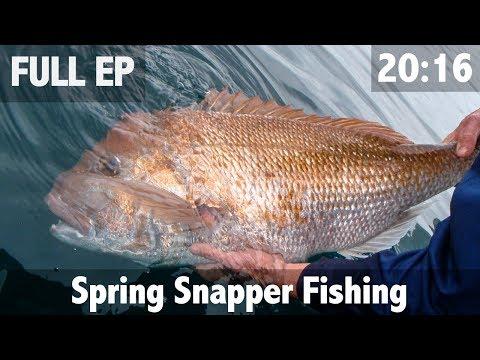Spring Snapper Fishing