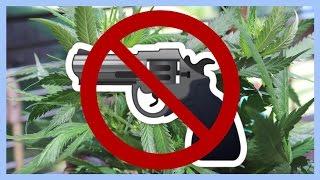 Cannabis Patients Denied Guns!! | NewsNug recap | CoralReefer
