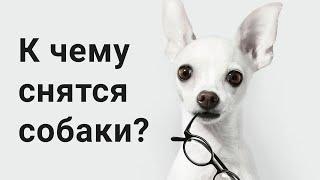 К Чему Снятся Собаки? Что Значит Собака Во Сне?