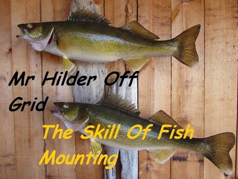 MAN CAVE OFF GRID~Fish Taxidermy With Mr Hilder