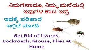 How To Get Rid Of Insects At Home |ಮನೆಯಲ್ಲಿರುವ ಕೀಟಗಳನ್ನ ಹೇಗೆ ತೊಡೆದುಹಾಕುವುದು | HELPFUL FOREVER