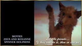 Собака и дельфин