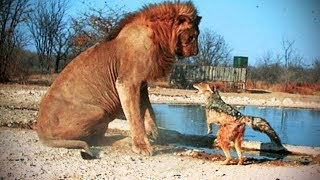 15 Most Fearless Animals On The Planet!