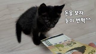돈 좋아하는 건 새끼 고양이나 사람이나 똑같습니다^^