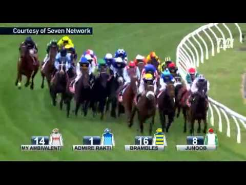2014 Melbourne Cup - Protectionist