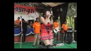 Gambar cover Dangdut Koplo Hot (Romansa-Diantara Bintang)