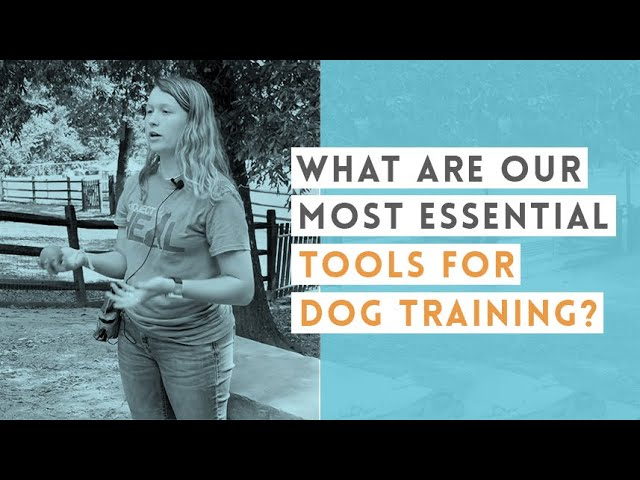 Essential Puppy Training Tips   Video
