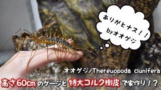爬虫類や奇蟲が好きでYouTubeで活動しています🦎 →チャンネル登録はこち...
