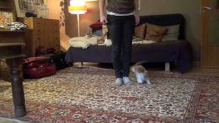 Some Canine Freestyle Moves- Clicker Dog Training Tricks