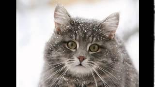 Корм сухой для кошек акана