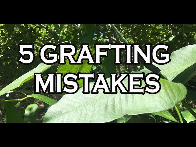 5 GRAFTING MISTAKES