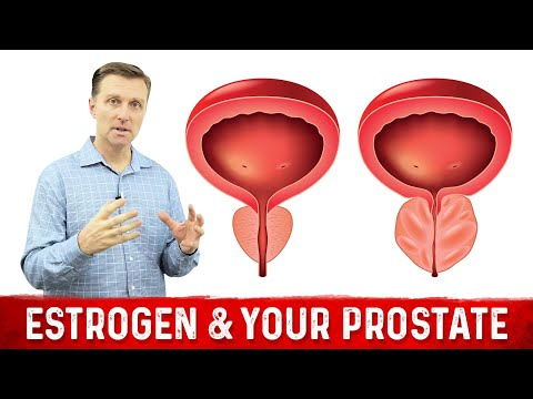 Estrogen & Your Prostate