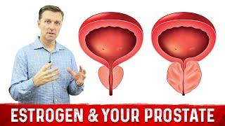 estrogen your prostate