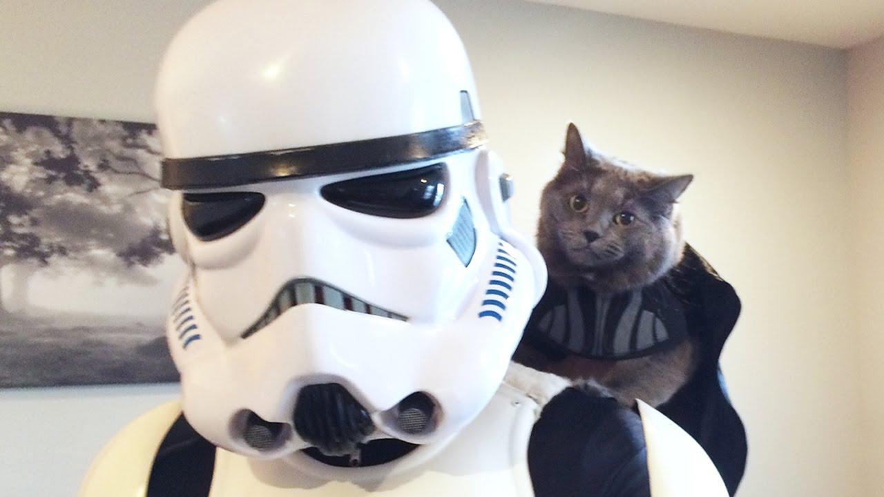 Batman Live Wallpaper Hd My Cat Hired A Stormtrooper Youtube