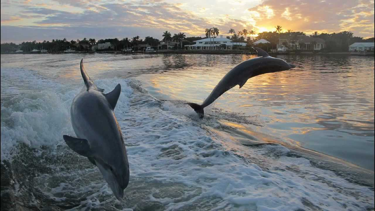 Boating With Dolphins In Naples Florida YouTube - Florida naples