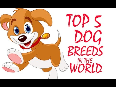 top-5-dog-breeds-in-the-world---smartest,-most-intelligent,-most-beautiful,-trainable-dogs-/breeds
