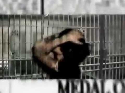 CASTIGATION - Suap (official video 2004)