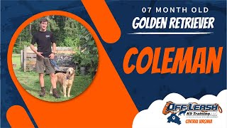 7 Mo. Old Golden Retriever (Coleman) | Best Dog Trainers in Richmond! | Dog Training Richmond
