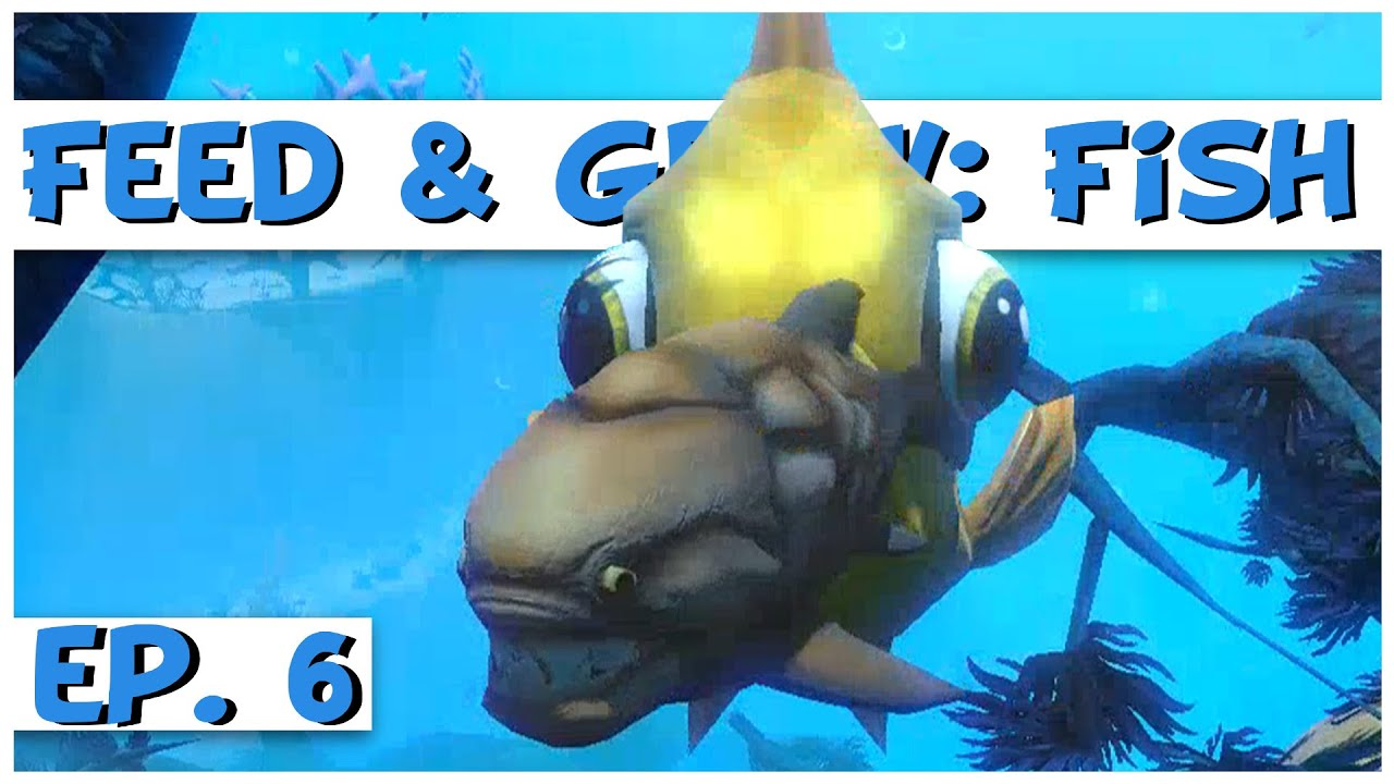 Feed and grow fish ep 6 gigantic goldfish feed for Fed and grow fish