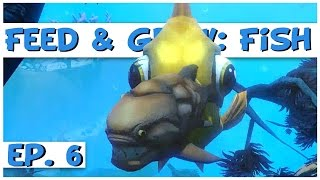 Feed and Grow: Fish - Ep. 6 - Gigantic Goldfish! - Feed and Grow: Fish Gameplay