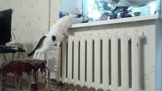 Любопытный Бабушкин кот лезет к хомяку