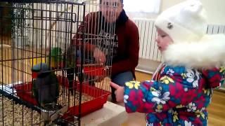 Большие попугаи :)