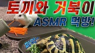 토끼와 거북이 ASMR 먹방! 동헤르만 육지거북과 렉스…