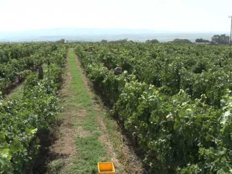 Grape expectations for Kenyan wine